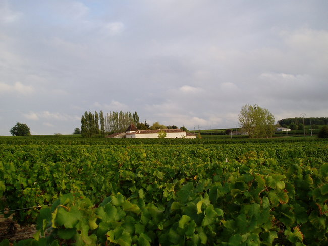 View from vineyards to house